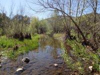 Cave Creek Loop hike (Cave creek trail and Skunk Tank trail)
