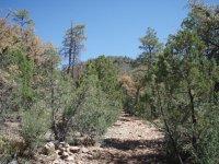 Gaddes Spring Trail #110