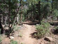 Drew Trail #291