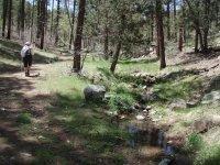 Miller Creek Trail