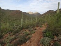 Lorraine Lee-Bowen Loop Hike (Tucson Mountain Park)