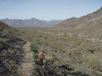 Alta-Bajada Loop (South Mountain)