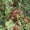 Attack of the ladybugs at Kendrick mountain (via the Kendrick trail)