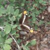 Colorful moth on the Cornucopia - Thicket spring hike