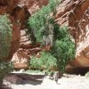 Hikers on the Havasupai trail