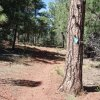 Look for the blue diamonds on the trees to stay on the Timber mesa trail