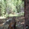 active deer along the little elden trail