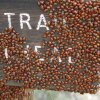 Ladybugs on the Kendrick mountain trail sign