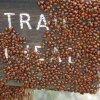 Ladybugs on the Kendrick mountain trail sign