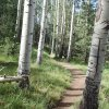 aspen on the Kachina trail