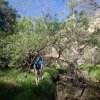 Hiking along the Peavine trail
