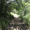 The trail to Mount Tritle