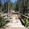 Bridge and Ridgeback on the Willow Springs lake trail