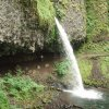 Small waterfall along the Oneonta gorge trail