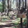 East Webber Creek trail