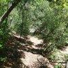 Along the Walnut trail