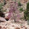 neat tree in redbud pass