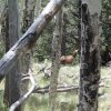 Elk spotted at Kendrick mountain (along the Pumpkin trail)