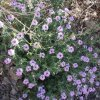 Wildflowers along the Sabino Canyon trail