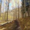 Along the Inner Basin trail