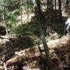 Creek crossing on the East Webber Creek trail