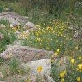 Desert wildflowers on the Kiwanis -Ranger loop