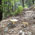 Mushrooms along the Smith Ravine trail