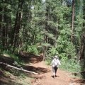 hiker on the East Webber Creek trail