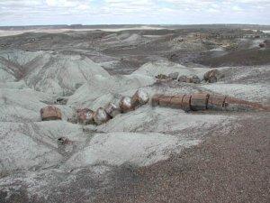 Petrified rock