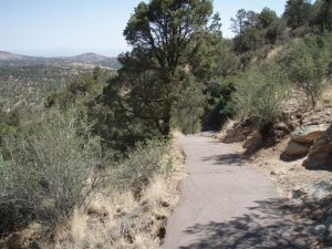 Along the Thumb Butte trail