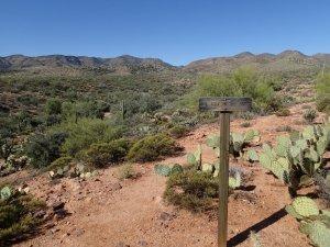 Tule trail