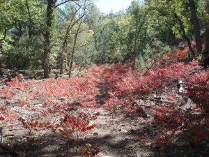 Fall color on the Pine mountain trail