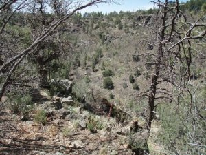 Gaddes canyon trail - upper