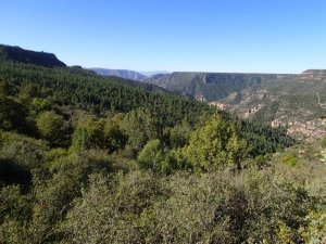 Views of Sycamore canyon