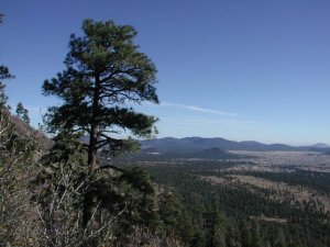 On the Elden lookout trail