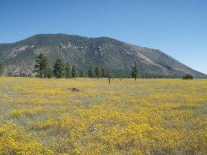 Views of Mount elden