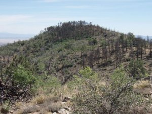 West Spruce mountain