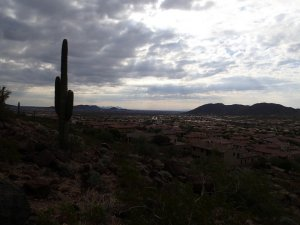 Saguaro overlooks the westwing mountain trail