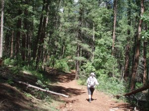 hiker on the East Webber Creek trail