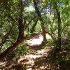The trail through Fay canyon
