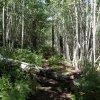 Along the Aspen loop trail
