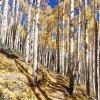 Golden leaves on the Inner Basin trail