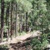 Timber mesa trail