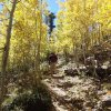 fall colors on Mount Elden trail