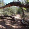 Fossil spring trail