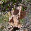 more ruins in Pueblo canyon