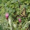 Butterflies along the Piedra river trail