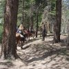 Horse riders on the Uncle Jim trail