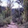 Cornucopia - Thicket spring hike