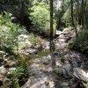 Aspen loop trail